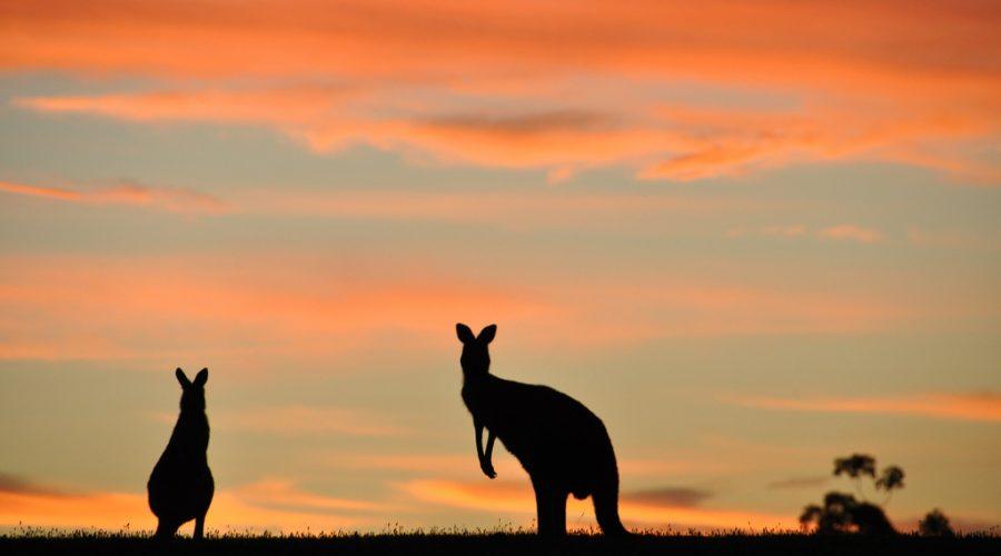 "American, Australian ""nones"" endure faith's intrusions"